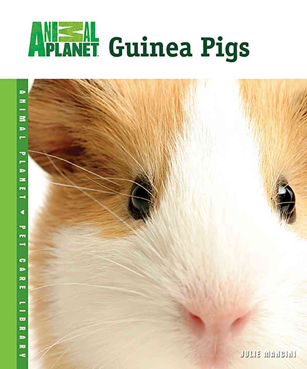 Guinea Pigs By Mancini, Julie